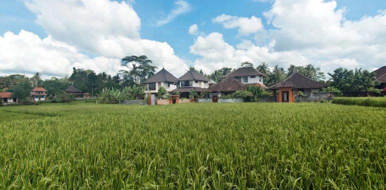 rice-terras-ubud-retreat